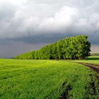 Лукашэнка загадаў аднавіць лесапалосы