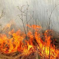 Начались пожары в экосистемах — МЧС и лесхозы утверждают, что всё под контролем