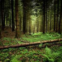 Парады аматарам ягадаў і грыбоў: як правільна паводзіць сябе ў лесе