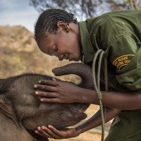 Спасенный носорог и горы мусора. World Press Photo 2018 определился с победителями