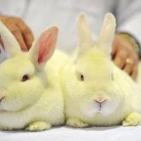 «Нет смысла показывать на живых существах то, что давно было известно». Какие опыты проводят над животными в Беларуси