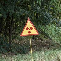 Радиационный фон улучшается: в лесах снижается активность цезия-137
