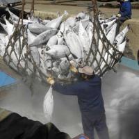 Ватикан занялся «cовременным рабством» в открытом море