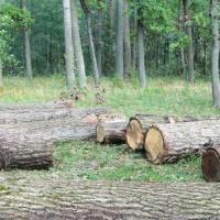 Остановите уничтожение природы в НП «Припятский»!