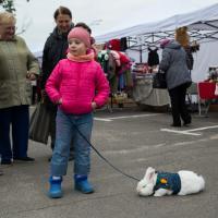 Дешевые овощи, танцы, кролики, экомастерские и презентации о сельском хозяйстве. Фото
