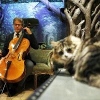 Нечеловеческая музыка: виолончелист записал альбом для кошек, в планах — пластинка для собак