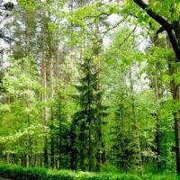 Новый Лесной кодекс передан на окончательное утверждение в Администрацию президента
