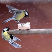 Кормить нельзя подкармливать. Тест о птицах, зиме и доброте душевной
