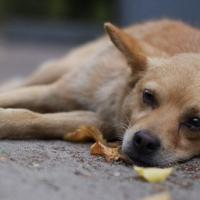 «Случаи отравления животных происходят по всему городу». Как обезопасить домашнего питомца от отравления