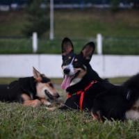 Налоговая взялась за владельцев собак. Кому и сколько нужно платить за четвероногих