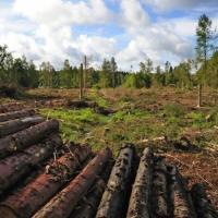 Новый Лесной кодекс несёт угрозу лесным экосистемам Беларуси. Не допустим!