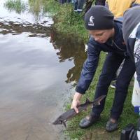Мотив? Рыбаки и школьники выпустили в Днепр 80 кг краснокнижной стерляди