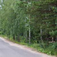 В Колодищах модернизируют энергосети: к вырубке свыше 500 деревьев.  «Каких? – Вас это не касается»