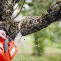 Главное — не подпускать дилетантов! Эксперты рассказали, что не так с обрезкой городских деревьев