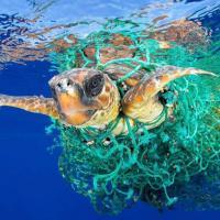 Борьба с пластиком: Что мешает беларуской торговле перейти на эко-упаковку. Комментарии «Евроопт» и «Виталюр»