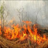 Российские экологи призывают ввести административную ответственность за пал травы