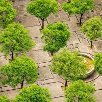 Доказано: зелёные зоны лечат горожан