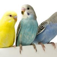 440 попугаев могут быть сожжены заживо в Мозыре