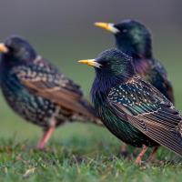 Хотите понаблюдать за птицами? Спешите, они уже вернулись!