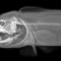 В лучах рентгена. Как выглядят дикие животные под воздействием гамма-излучения
