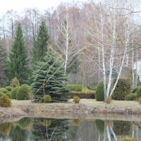 Беларусы завидуют: украинские лесоводы создали «Полесский Версаль»