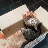 «Хотя бы укололи обезболивающее». На минской ветстанции отказали в помощи сбитому коту