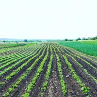 На Минщине и Гродненщине на 43 гектарах экспериментируют с органическим земледелием