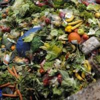 Сроки разложения мусора: насколько еще нам хватит планеты?