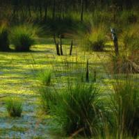 Беларусь занимает первое место в мире по восстановлению болот