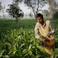 Чаепитие с пестицидами