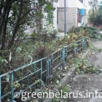 Фотофакт: как в Гродно подрезают кусты