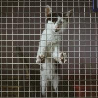 Под угрозой усыпления. Единственному в Минске «приюту» для бездомных животных не хватает мест