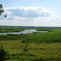 «Болото — это не только торф, но и источник альтернативного топлива». В Беларуси обсуждают судьбу торфяников