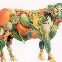 Американские учёные рекомендуют диету из растительной пищи для устойчивости планеты