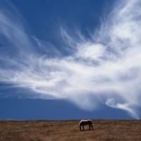Нашумевший отчёт ВОЗ: умирают ли беларусы из-за плохого воздуха?