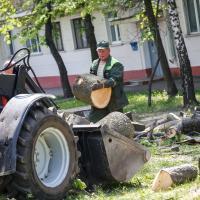 Минус 135 здоровых деревьев на улице Центральной в Минске. Всё ради теплотрассы