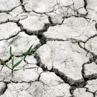 Цена изменения климата: из-за неблагоприятной погоды Беларусь ежегодно теряет 93 млн долларов