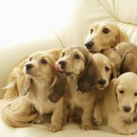 В Беларуси могут ввести квоты на количество животных в квартире