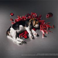 24 апреля мир отмечает День защиты лабораторных животных. Беларусь пока в стороне?