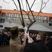 Компания «А-100 Девелопмент» подарила Лицею БГУ 15-летнюю иву и пересадила взрослую сосну (фотофакт)