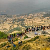 Китайские чудо-террасы: Утки, рыба, туман вместо пестицидов помогают вырастить рис