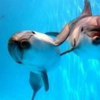Против строительства дельфинариев в Минске!