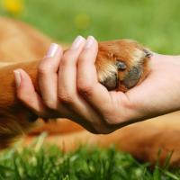 Россияне просят Путина учредить должность Уполномоченного по правам животных. Для Беларуси это утопия?
