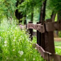 Аренда лесов и озёр в Беларуси: ограничен ли туда доступ граждан?