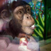 Минчане приносят все меньше овощей питомцам зоопарка