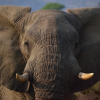 7 удивительных фактов, которые изменят ваше представление о слонах