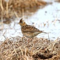 Весна идёт: Беларусь встречает первых перелётных птиц