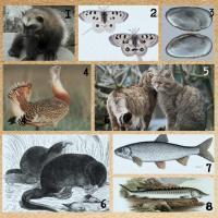 Инфографика ко Дню биоразнообразия: одни виды навсегда исчезли, гибель других мы не должны допустить!