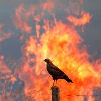 Животные в огне: весенние палы — глазами их жертв