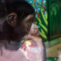 Пятничный тест. Что можно приносить в Минский зоопарк и зачем это нужно?